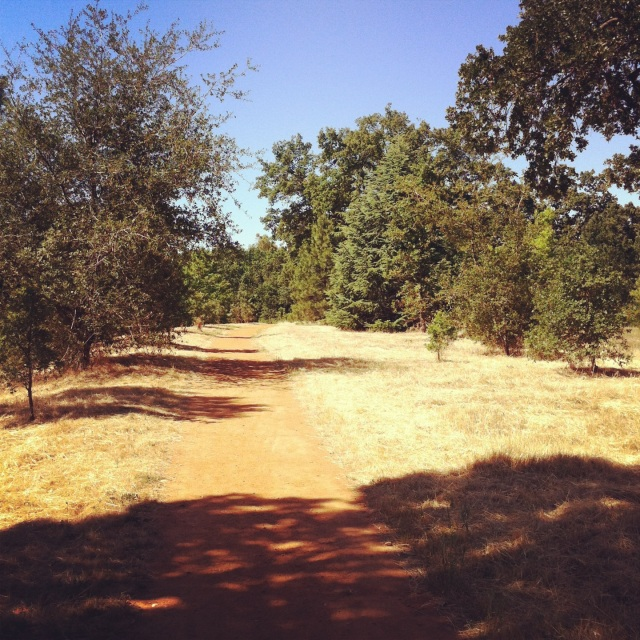 Doubletrack dirt trail winding through our typical grassy oak woodland landscape