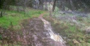 Wet spot on trail at Wild Oaks Park.