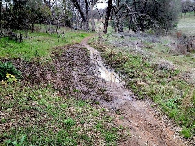 Wet spot on trail at Wild Oaks Park, El Dorado Hills, CA.